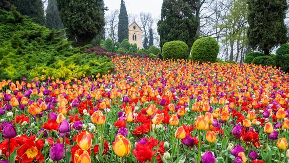 Festa dei Tulipani a Villa Sigurtà